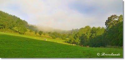 Broceliandes Gartenträume - ein Cottage Garten im Bergischen Land: August 2010