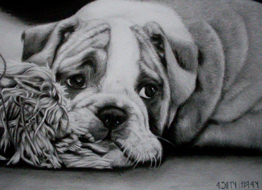 Kleurplaten Engelse Bulldog.Pin Van Hilde Bijmolen Op Hilde Honden Katten En Kleurplaten