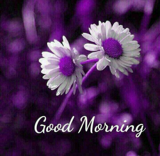 Good morning quotes sunshine for you. The most difficult task is to make everybody happy, the simplest task is to be happy with everyone. Good Morning Wishes, Morning Pics, Good Morning Cards, Morning Msg, Good Morning Saturday, Good Morning Happy, Good Morning Flowers, Good Afternoon, Good Morning Messages