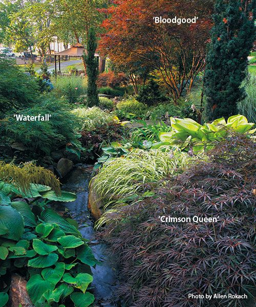 Designing with Japanese maples