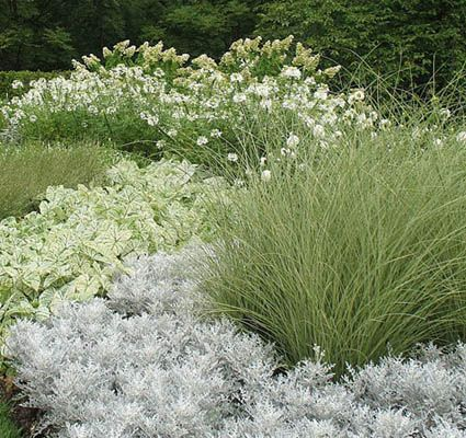 White and silver flowers light up an evening garden...