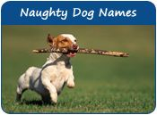Naughty Dog Names Names For Naughty Puppies Page 1 Dog Names Dogs Newborn Puppies