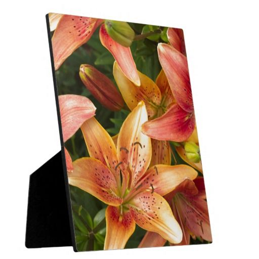 Garden Lilies Photo Plaques