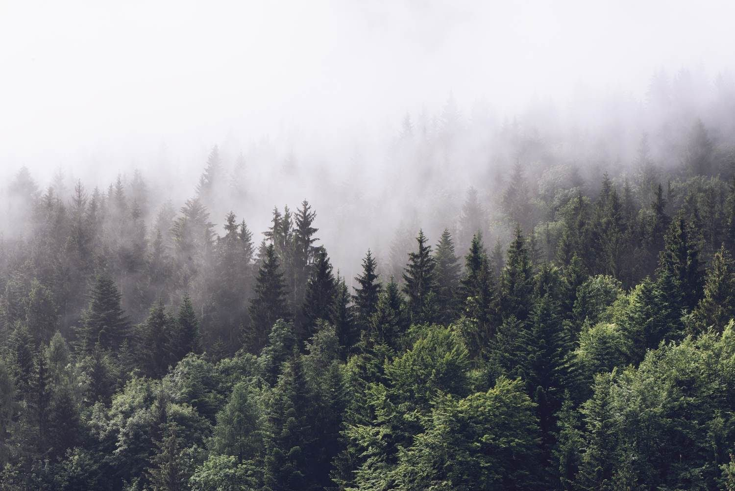 Cloudy forest Wall mural in 2020 Forest wallpaper, Misty