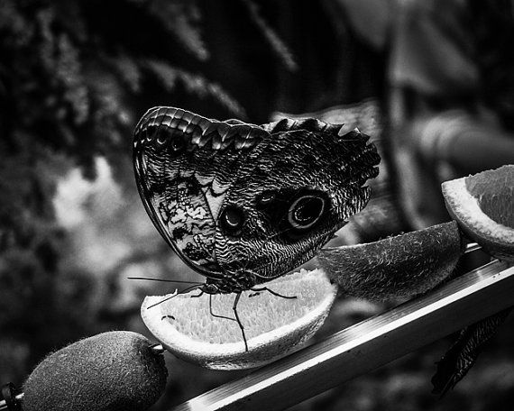 Photography · 8x10 black and white