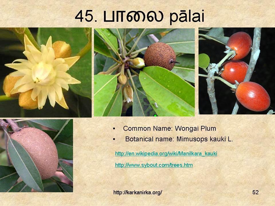 Slide52 in 2020 Flowers, Jasminum sambac, Arabian jasmine