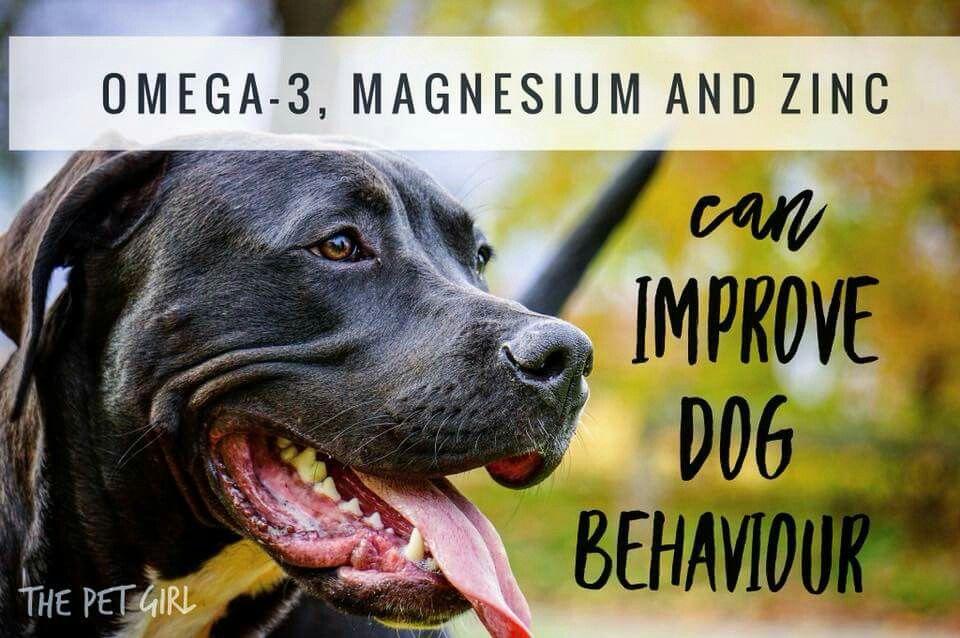 Omega 3 Magnesium And Zinc Can Improve Dog Behaviour