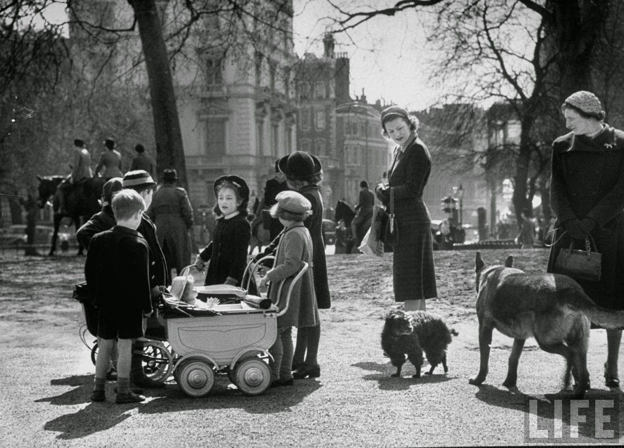 Dog Adoption Liverpool Ny
