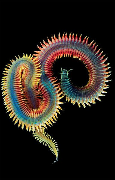 The Amazing Diversity Of Animal Life In Pictures Underwater Creatures Sea Animals Sea Creatures