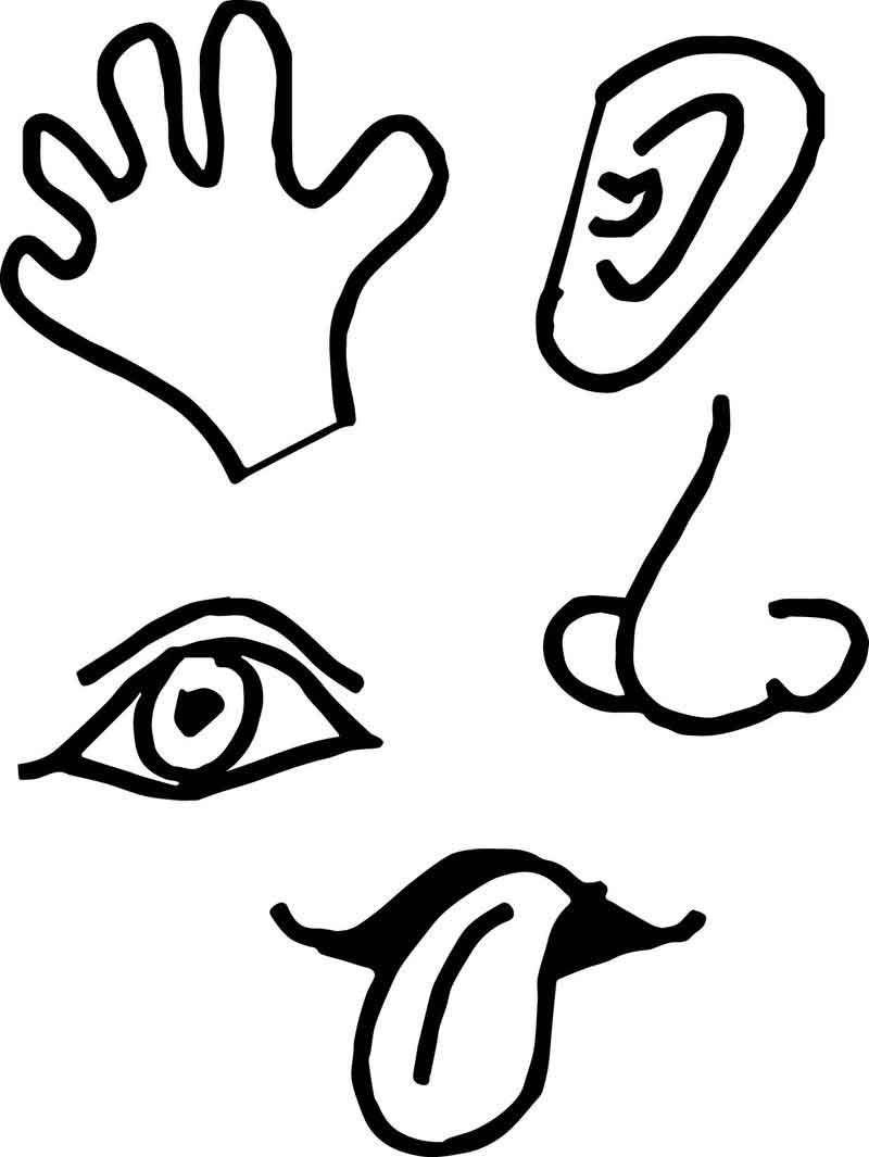 5 Senses Picture Coloring Page.