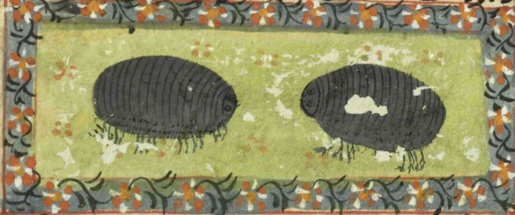 """Woodlice from """"The Book of Wonders of the Age"""" (St Andrews ms32(o))"""