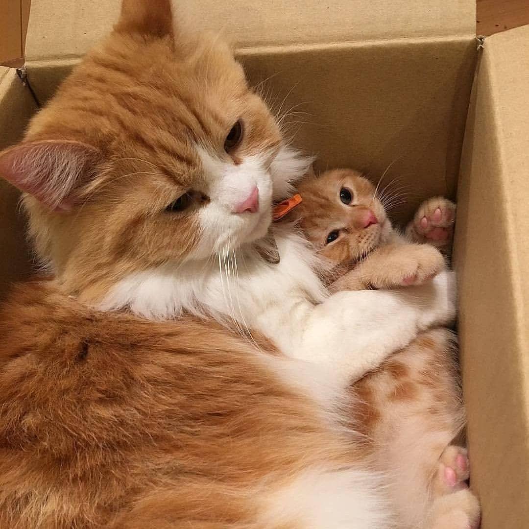Kittens Of World On Webstaqram Posts Videos Stories Webstaqram Mom Cat And Her Kitten From Yuriyuri4 Cute Cats Cute Cats And Kittens Kittens Cutest