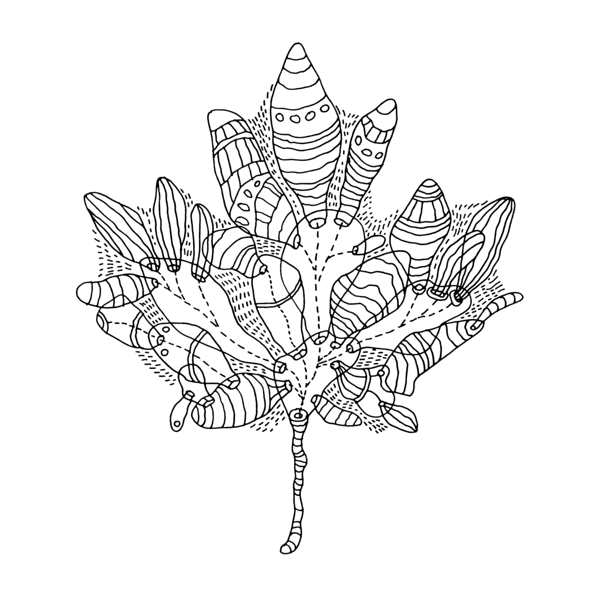 Canadian Maple Leaf Colouring Page by Donald Lee | Art Doodle ...