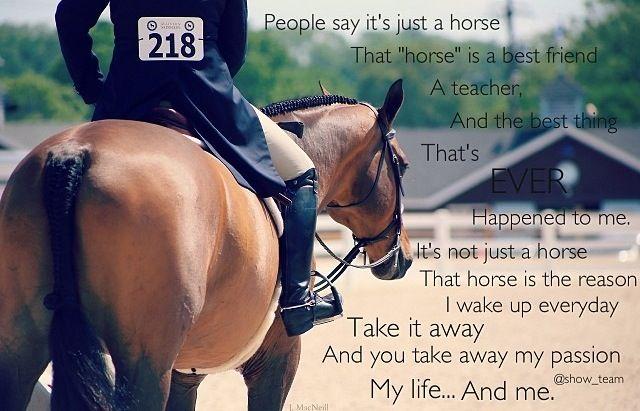 Horses are the best teachers