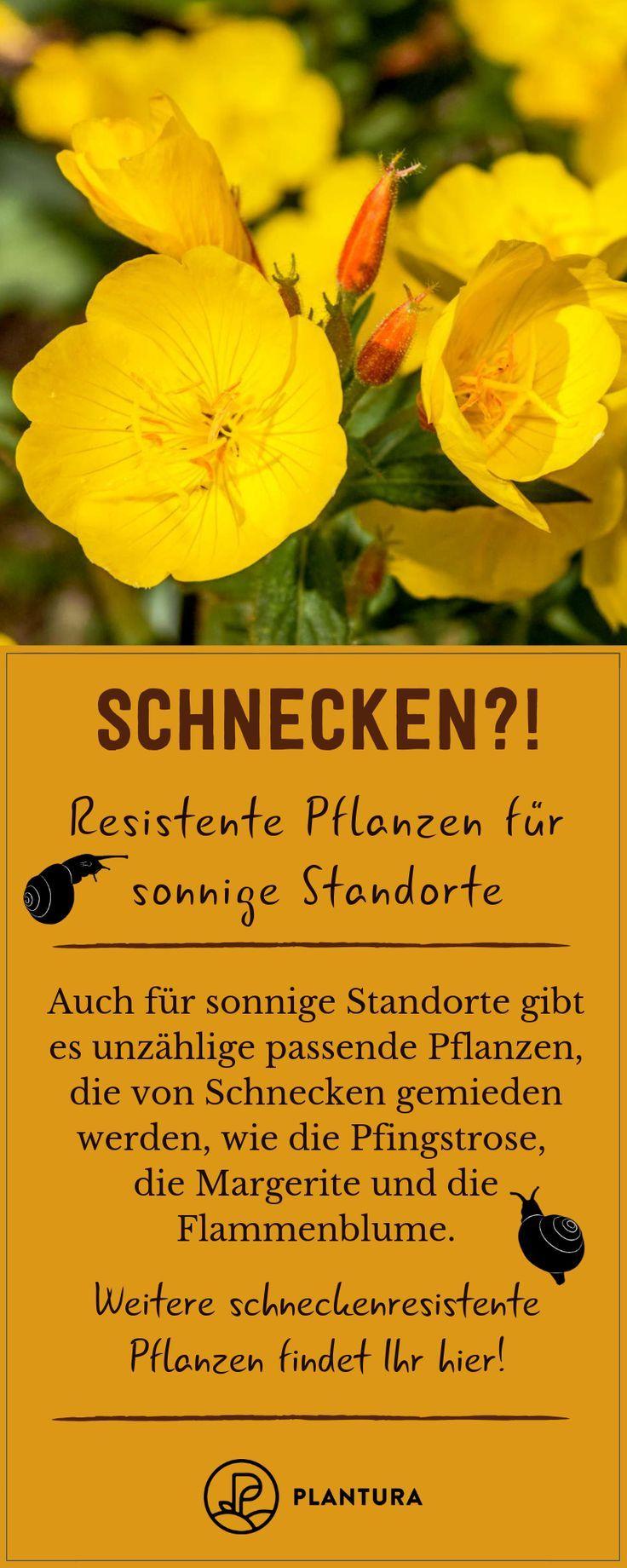 Schneckenresistente Pflanzen: Blumen, Stauden & Gemüse,  #Blumen #Gemüse #Pflanzen #Schnecken... #gemüsegartenanlegen