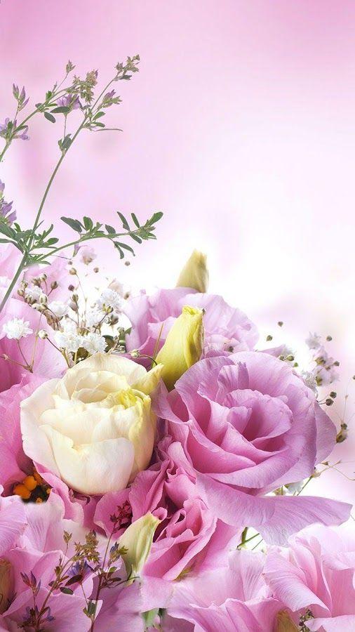 Fondos Para Whatsapp De Flores Pantalla Pantalla Flores Y Fondos