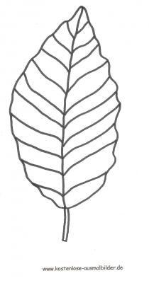 malvorlage buchenblatt leaf pinterest vorlagen schablone und ausmalbilder. Black Bedroom Furniture Sets. Home Design Ideas