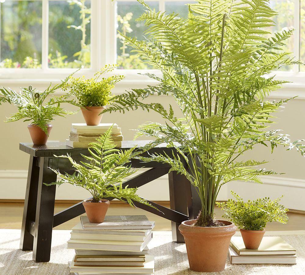 картинки с растениями в квартире летописцы оставили крайне