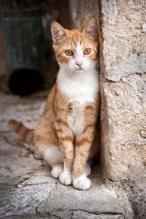 Pinterest For Business Marketing Expert Uk Specialist Orange Tabby Cats Cute Cats Cute Cats And Kittens
