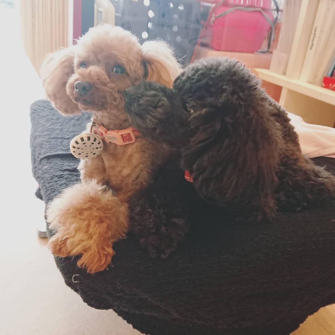 ちゅっ 箕面dog Dreiks ドレイクス トリミング ドッグホテル ペットホテル わんわん幼稚園 しつけ教室 ドッグランでお勉強 Loveわんこ かわいい 犬 犬バカ部 Instadog Dogstagram Instagram Dogs Dog Language Your Dog