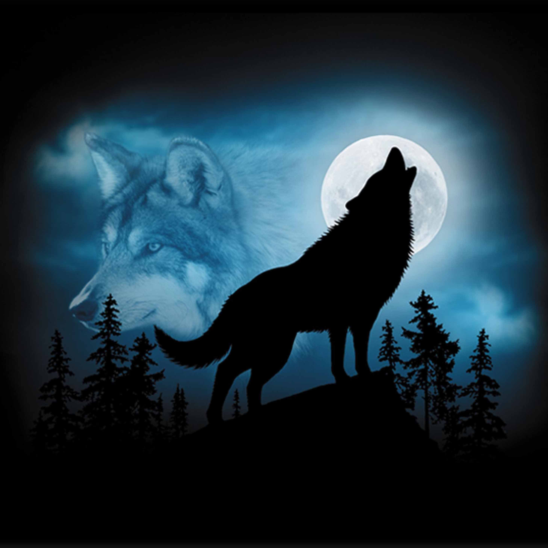 Pin En Wolves