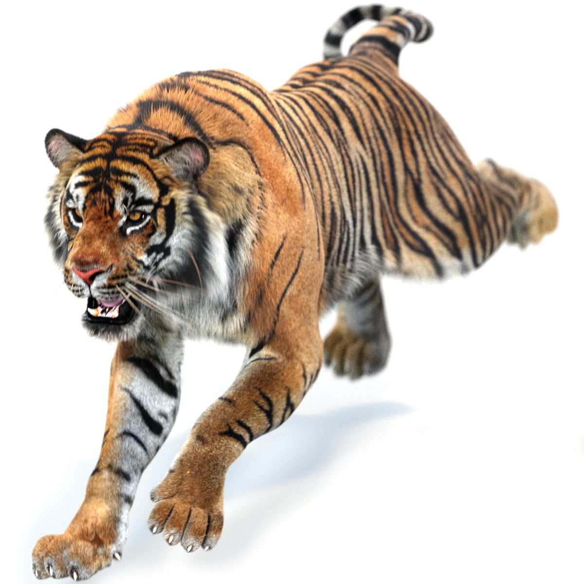 Sumatran Tiger Animated Fur Is A High Quality 3d Model To Add More Details And Realism To Your Rendering Project Tiger Fur Sumatran Tiger Black Panther Cat