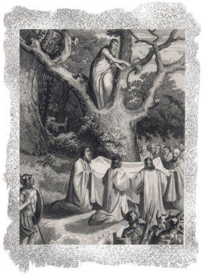 The Ogham Trees Mistletoe All Heal In 2020 Druid Pagan Gods Ancient Celts