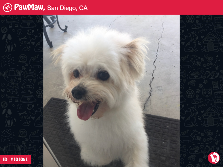 Craigslist San Diego Pets Lost And Found