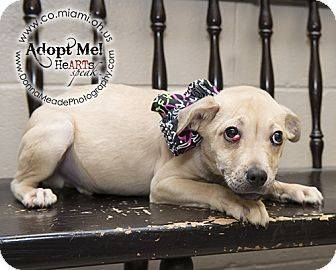 Code Red Pound Full Sherlock Pug Mix Male Miami County