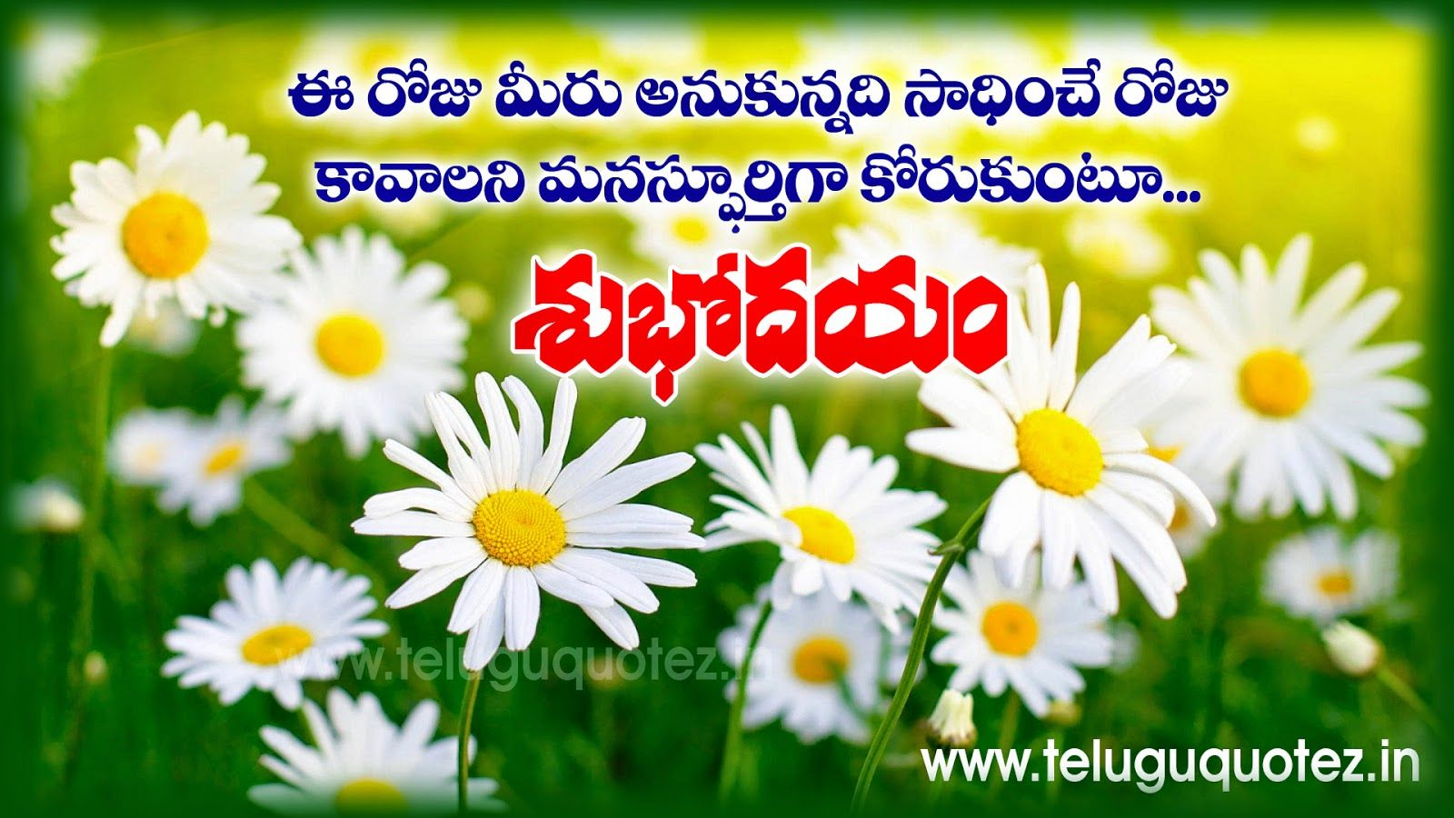Good Morning Telugu Thoughts And Quotesqith Nice Pictures Beautiful Flowers Pictures Flower Pictures White Flowers