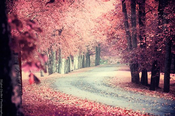 think pink fairytale photography misty pink tree image enchanted forest woods mist road dreamy photo print - Pink Trees