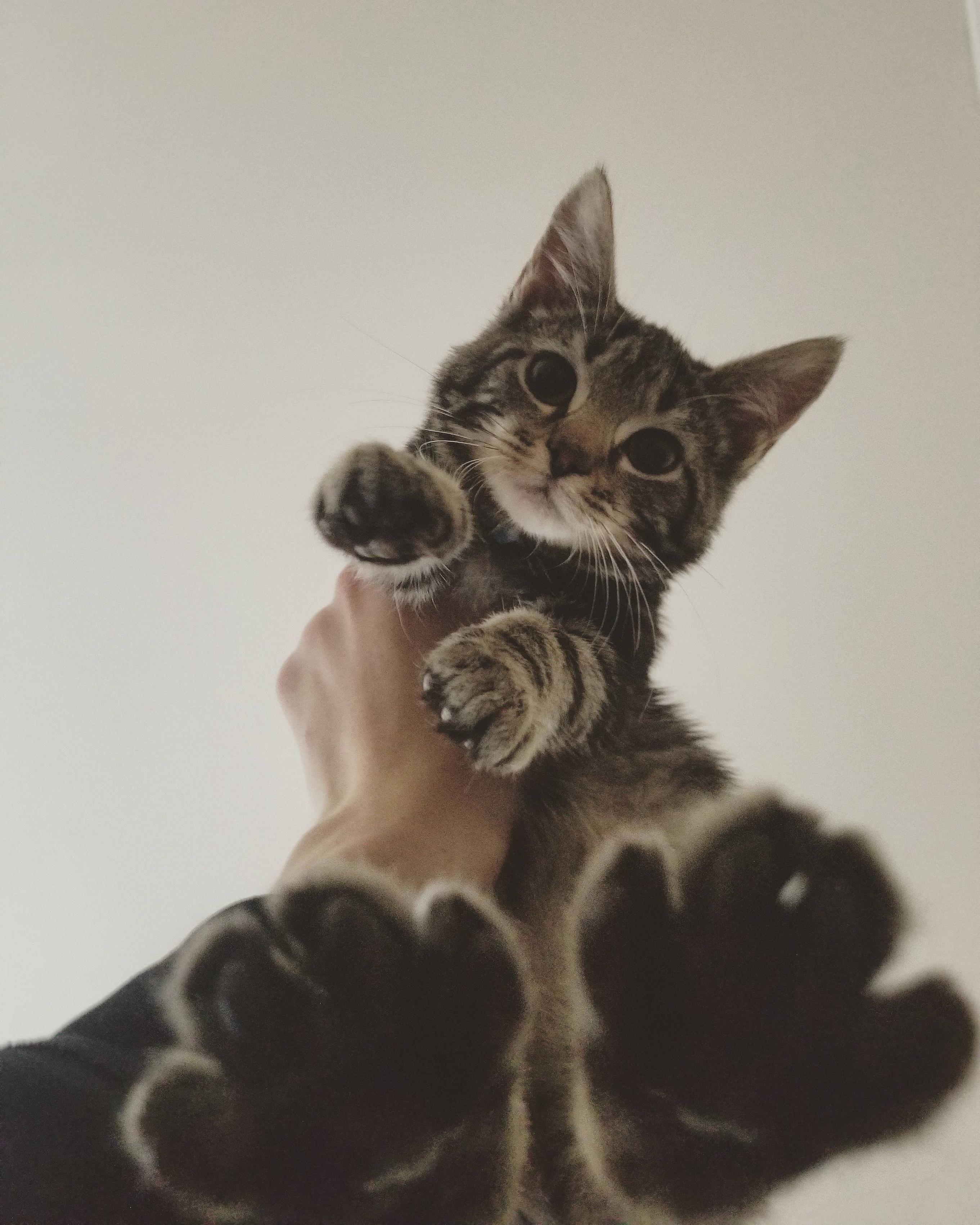 Reddit meet Carl Beautiful cats, Cute animals, Cats and