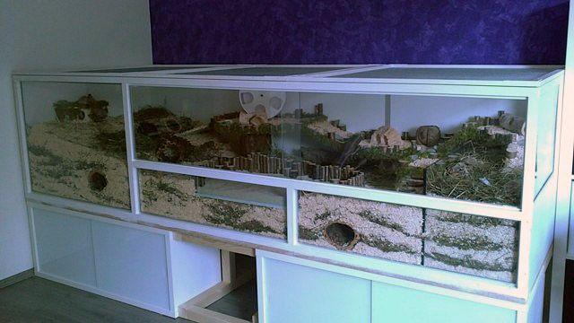 naturnahe hamstergehege gehege cages jaulas hamster pinterest rennmaus square und. Black Bedroom Furniture Sets. Home Design Ideas