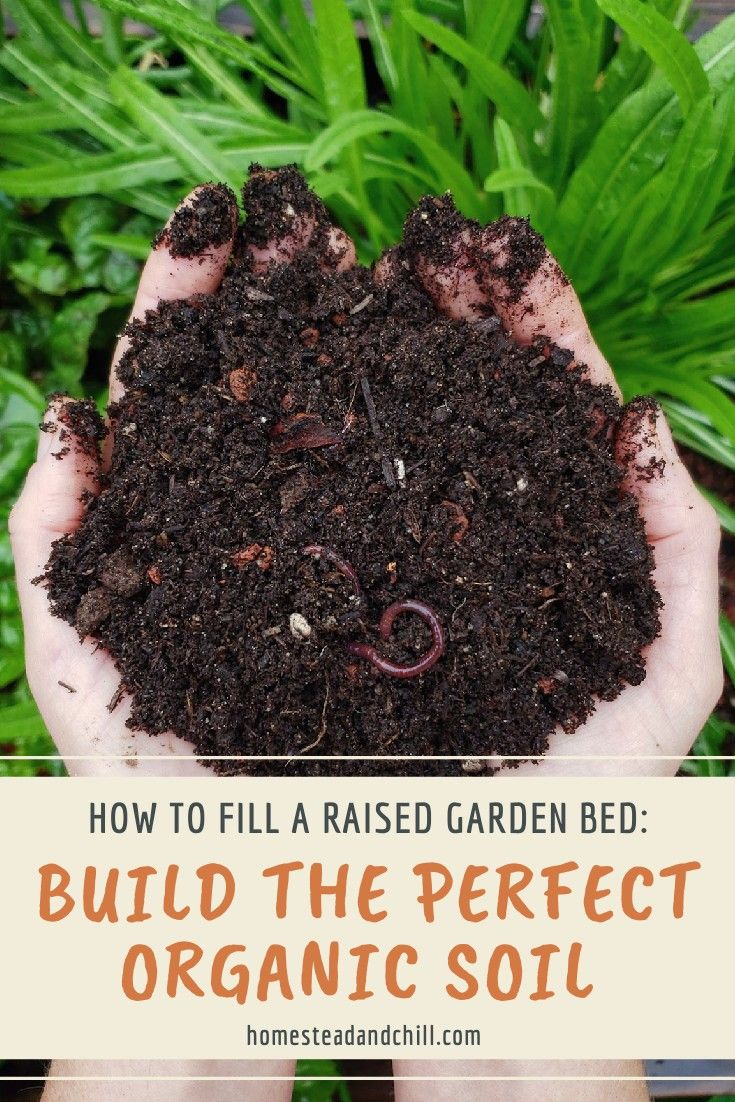 Filling and Planting DIY Raised Gardens (With images