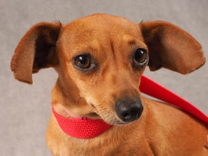 Adopt Hazel A Lovely 5 Years Dog Available For Adoption At
