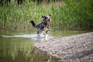 Pet health: How to increase your dog's lifespan