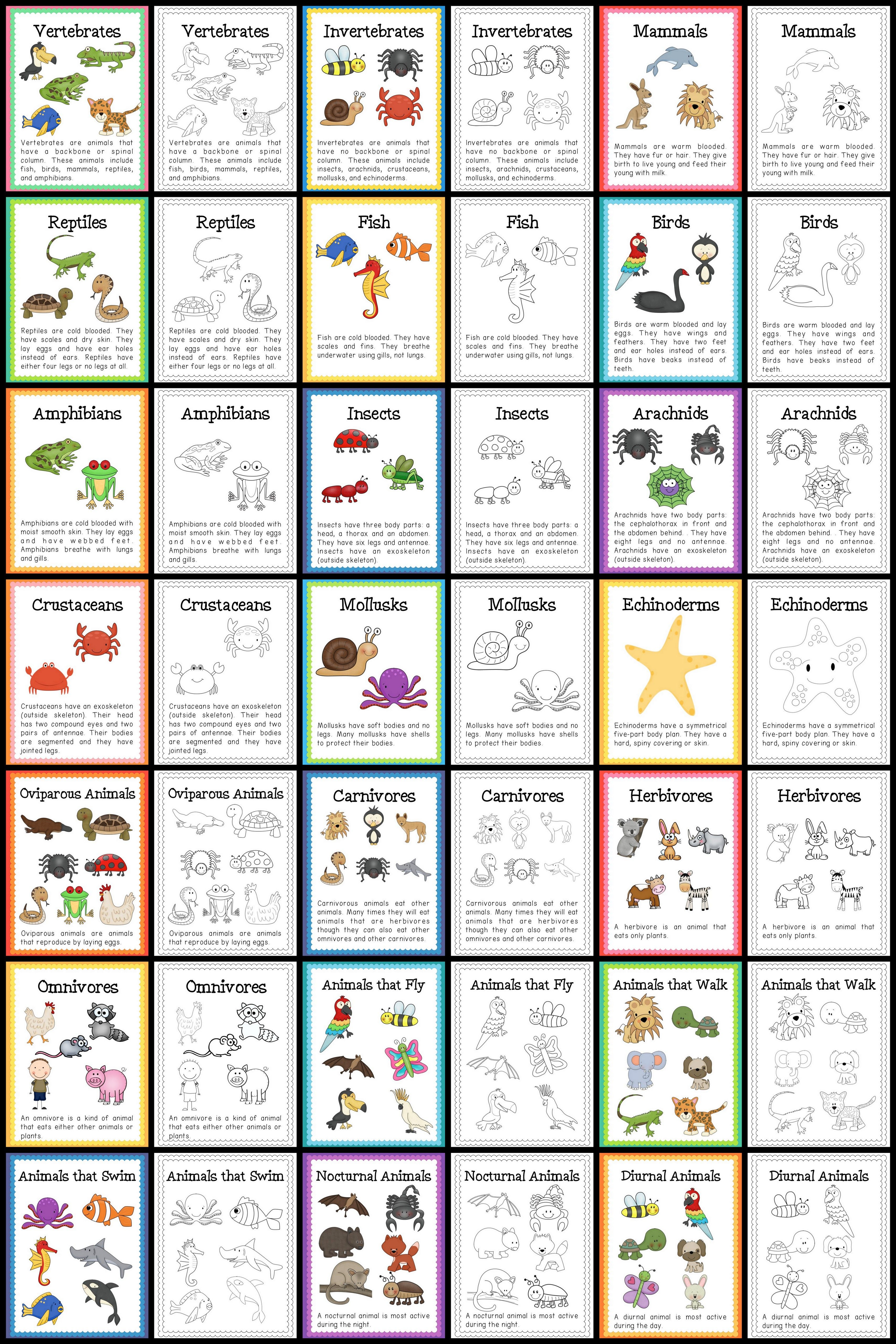 Worksheets Animal Classification Worksheet animal classification life cycles science bundle pinterest posters part of the bundle
