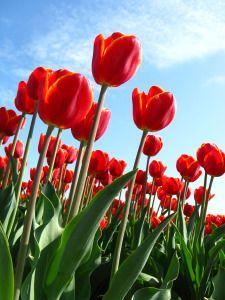 Spring flower gardening starts now.