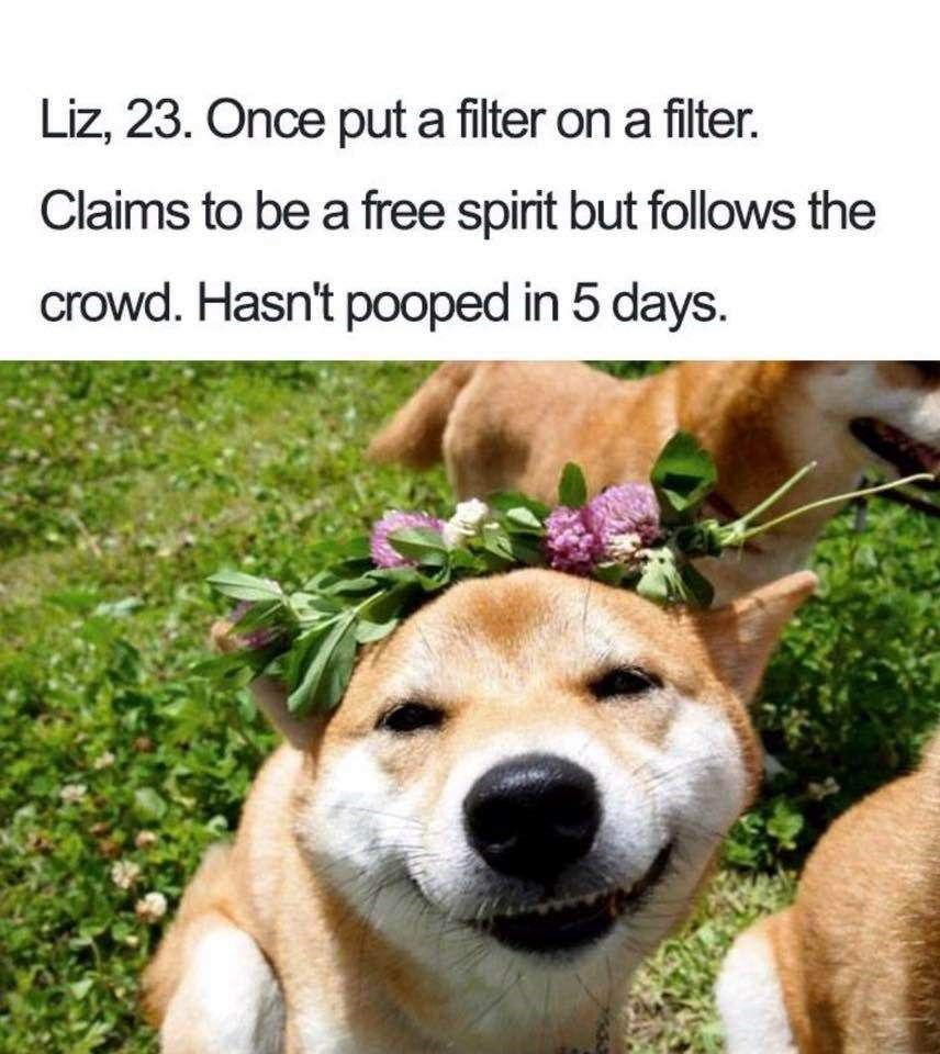 All New Dog Bios That Will Have You Laughing All Day (33