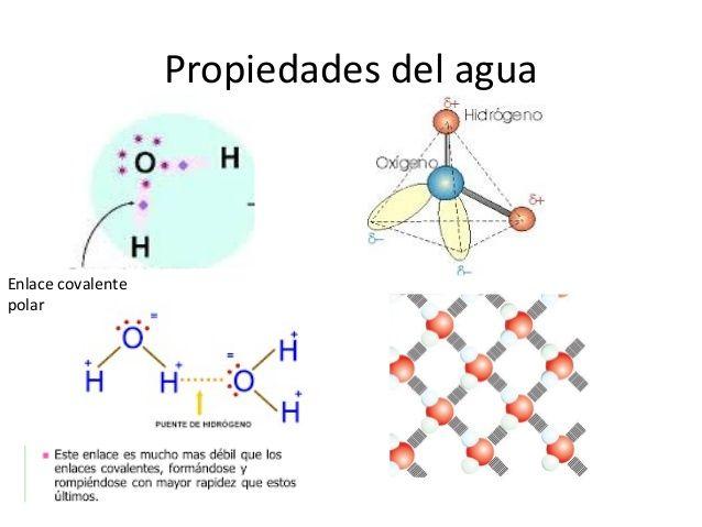 Resultado de imagen de enlaces covalentes del agua | Chemistry ...