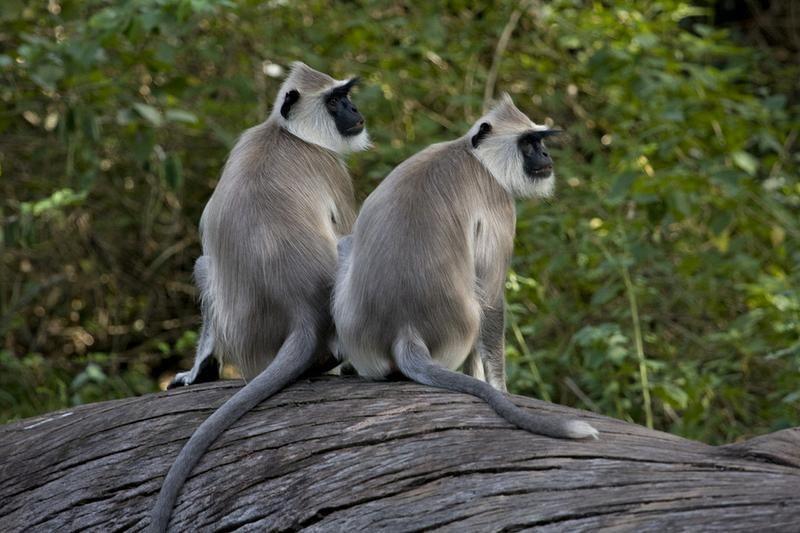 Explore Chinnar Wildlife Sanctuary, India (UNESCO site