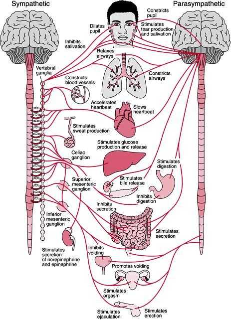 Communicating with your Nervous System | RAHUL-SAMRAT | Pinterest ...