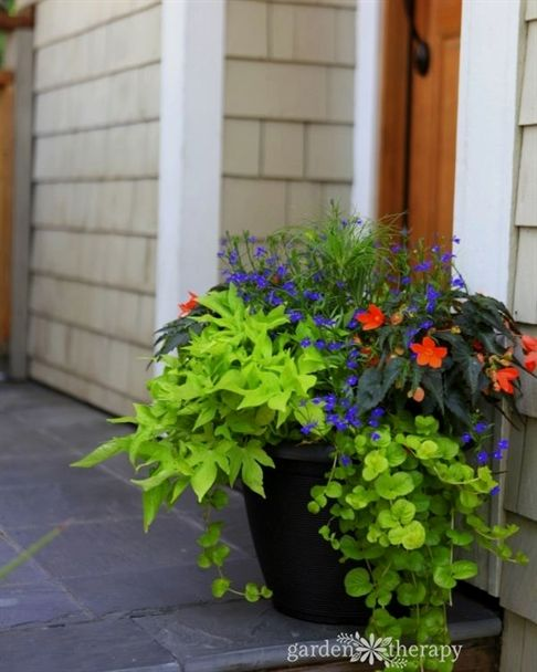 Use these container gardening ideas for shade as inspiration for