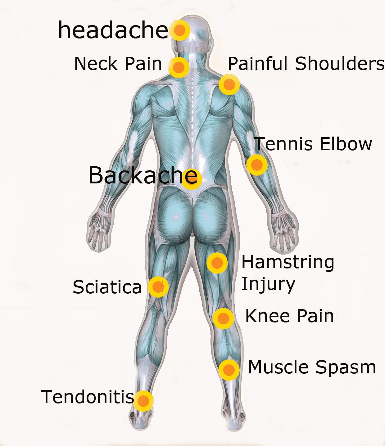 bodyrear.png (1240×1437)