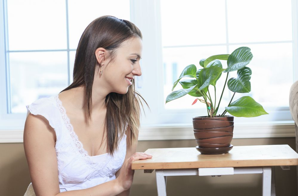How Houseplants Can Boost Immunity, Make You Happier and Clean Your Air | Young and Raw