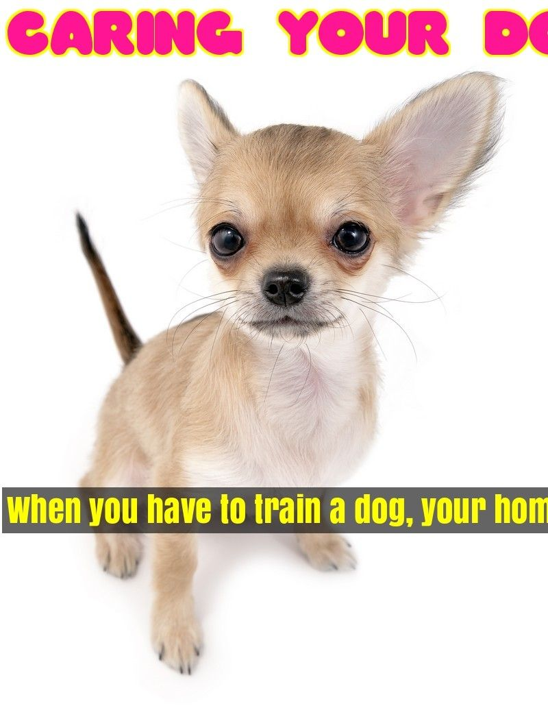 Treat Your Pet Right With These Dog Care Tips Pet Dogs Dog
