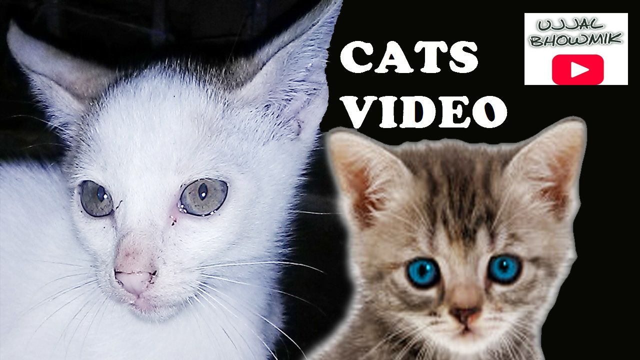 Kitty videos for children Funny Cats Videos pilation Most See