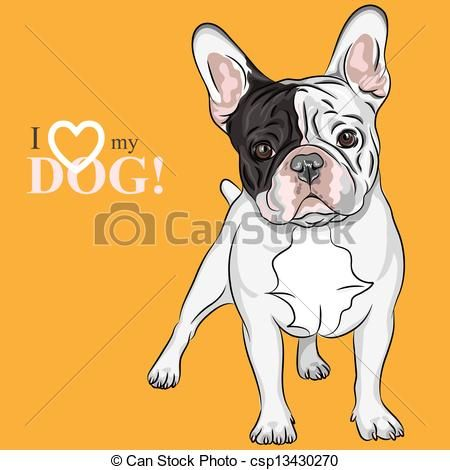 Vector Vector Sketch Domestic Dog French Bulldog Breed Stock