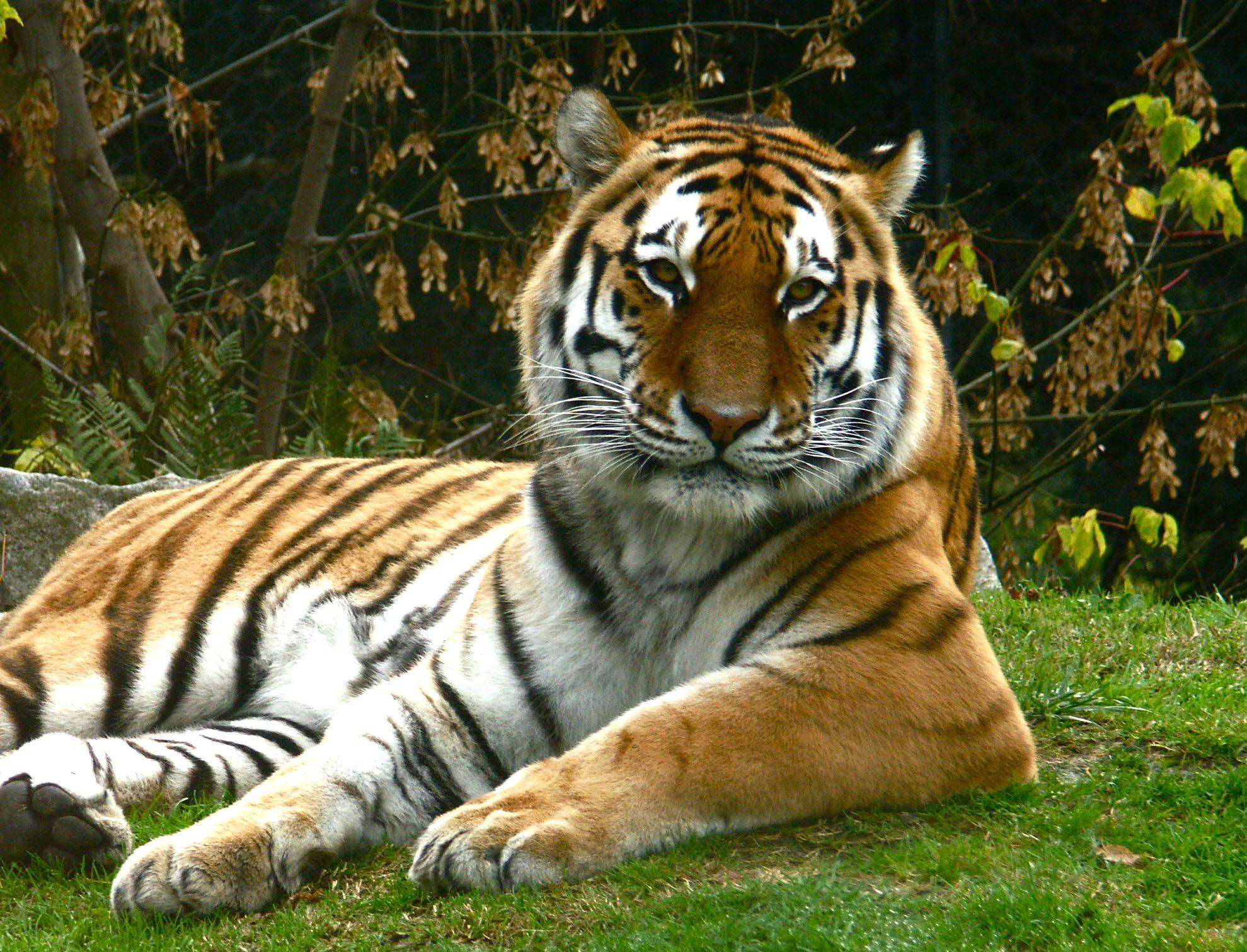 Les plus beaux f lins du monde recherche google animals are amazing pinterest more Les plus beaux hommes du monde