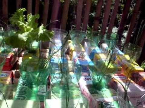 Hortaliças reciclando caixinhas de leite e garrafa pet